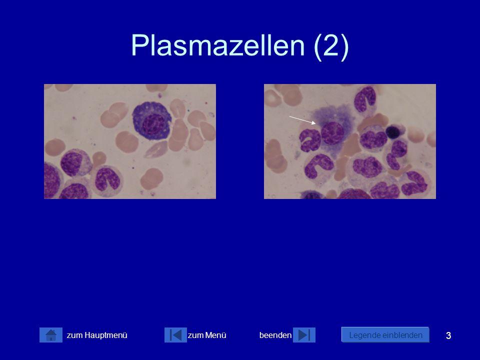 3 zum Menübeenden Legende einblenden zum Hauptmenü Plasmazellen (2)