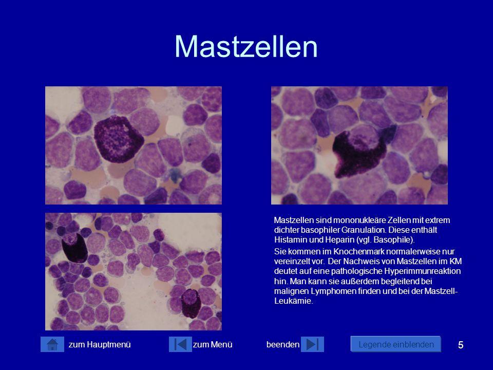 5 zum Menübeenden Legende einblenden zum Hauptmenü Mastzellen Mastzellen sind mononukleäre Zellen mit extrem dichter basophiler Granulation. Diese ent