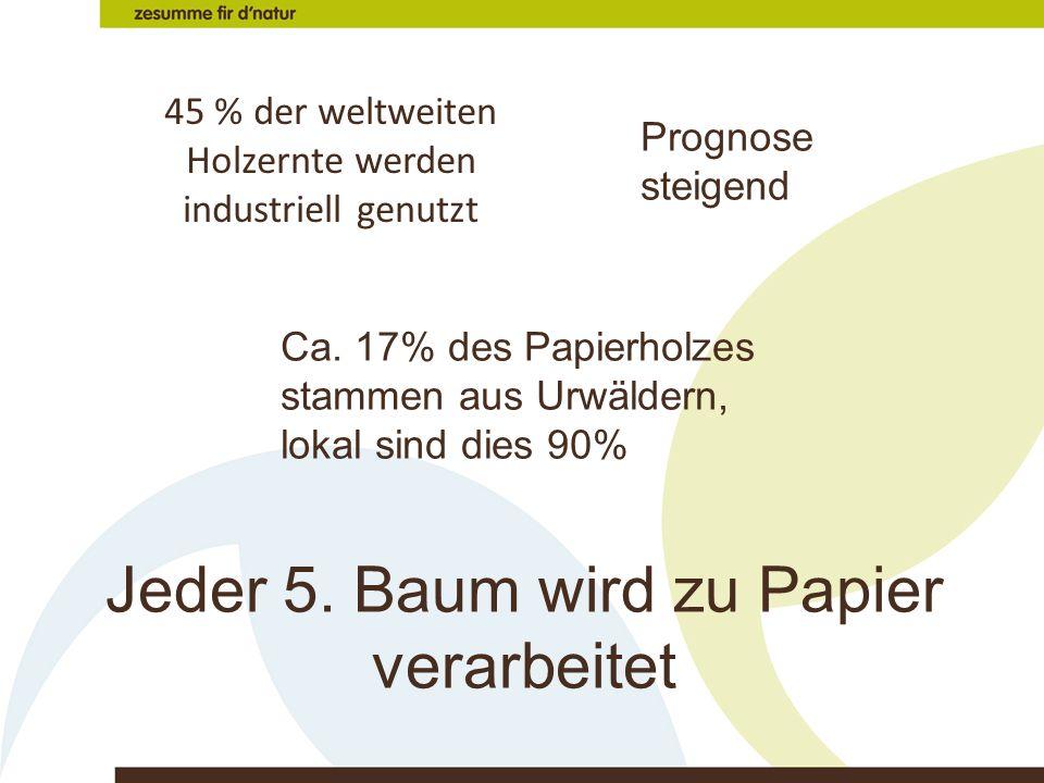45 % der weltweiten Holzernte werden industriell genutzt Prognose steigend Ca. 17% des Papierholzes stammen aus Urwäldern, lokal sind dies 90% Jeder 5