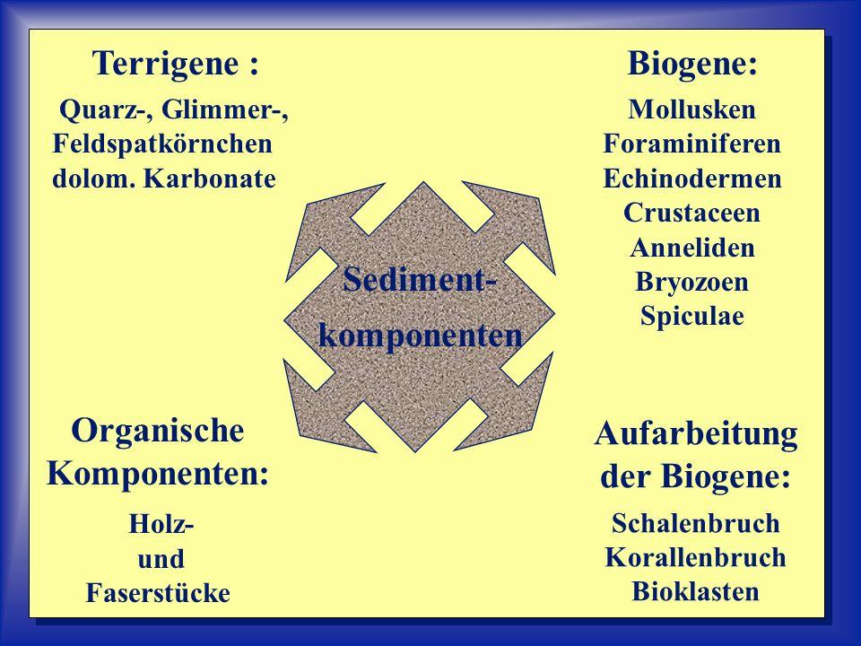 Sediment- komponenten Terrigene : Quarz-, Glimmer-, Feldspatkörnchen dolom. Karbonate Organische Komponenten: Holz- und Faserstücke Biogene: Mollusken