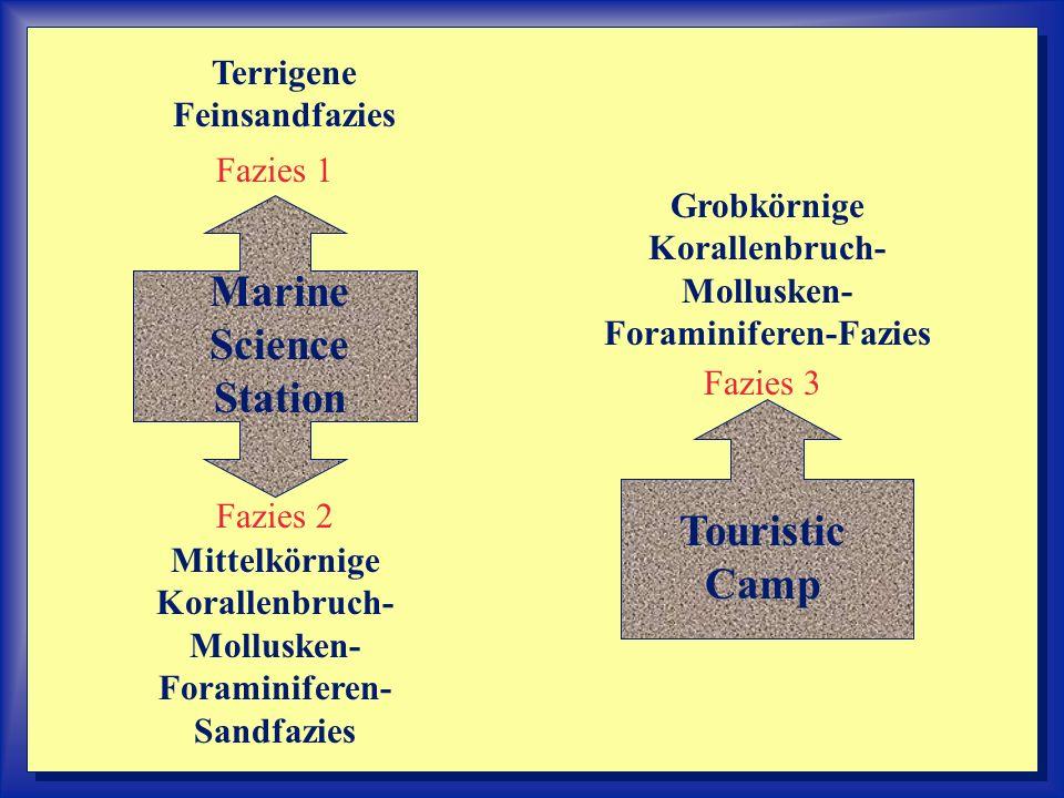 ----- --- Marine Science Station Touristic Camp Terrigene Feinsandfazies Mittelkörnige Korallenbruch- Mollusken- Foraminiferen- Sandfazies Grobkörnige Korallenbruch- Mollusken- Foraminiferen-Fazies Fazies 1 Fazies 2 Fazies 3