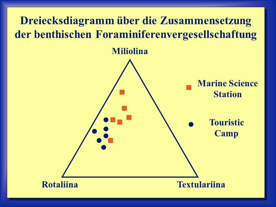 Miliolina TextulariinaRotaliina Dreiecksdiagramm über die Zusammensetzung der benthischen Foraminiferenvergesellschaftung Marine Science Station Touristic Camp