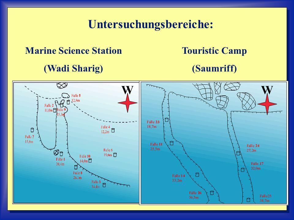 Auswahlkriterien der Untersuchungsbereiche: Untersuchung eines terrigen und eines karbonatisch beeinflußten Bereiches.