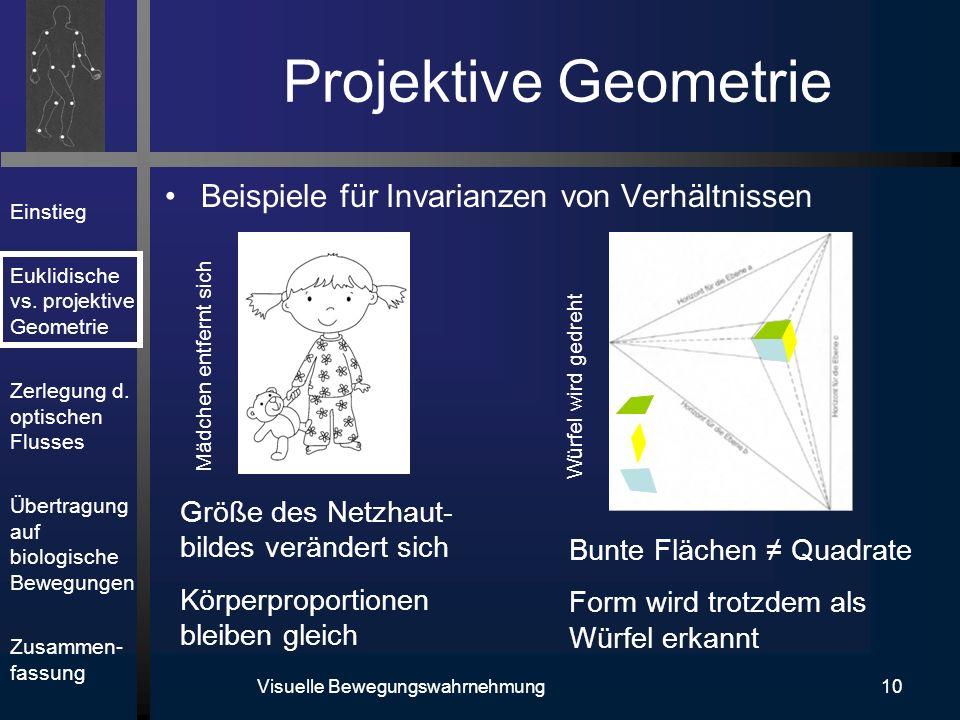 Einstieg Euklidische vs. projektive Geometrie Zerlegung d. optischen Flusses Übertragung auf biologische Bewegungen Zusammen- fassung Visuelle Bewegun