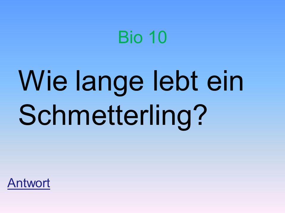 Bio 10 Wie lange lebt ein Schmetterling? Antwort
