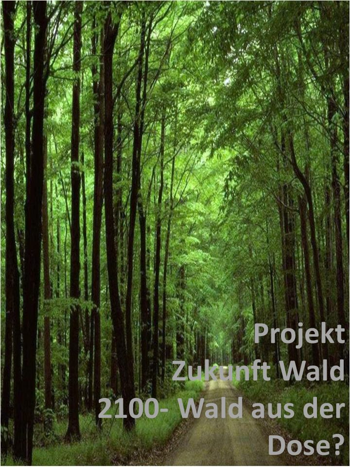 Welche Visionen haben die Schüler unserer Schule zum Thema Wald 2100.
