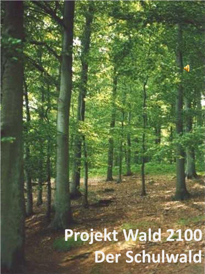 Fazit Der Wald-Raum wurde von den Schülern als künstlich wahr- genommen, weil es z.B.