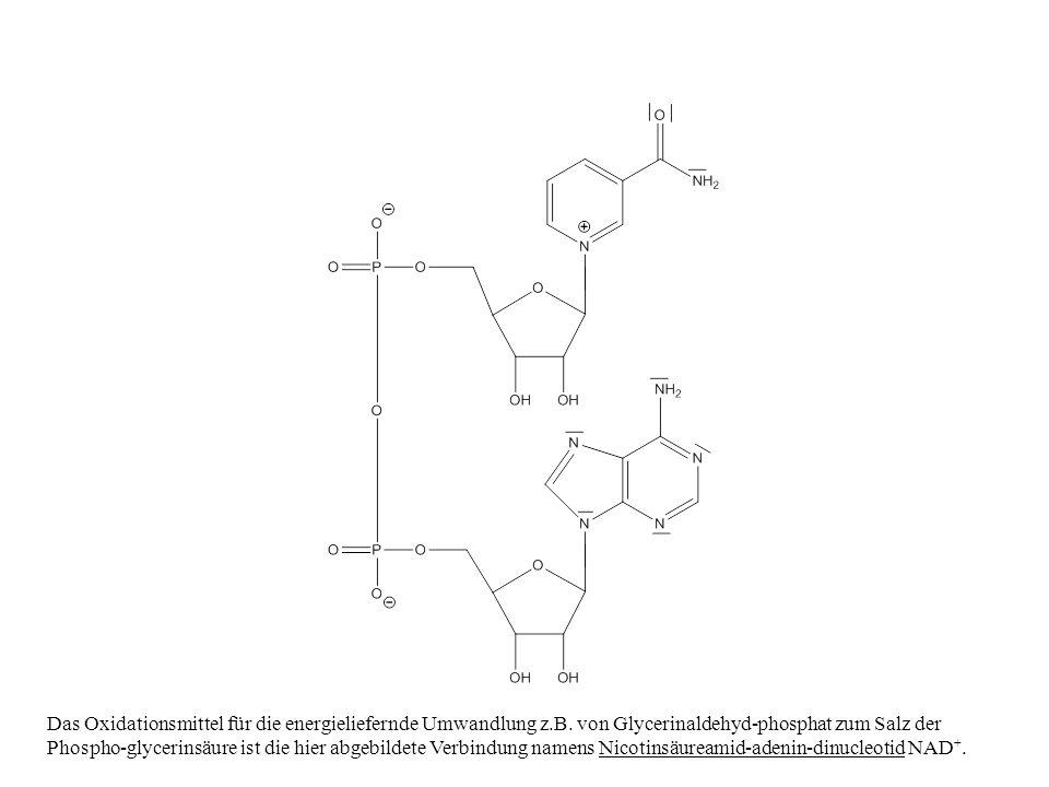 Das Oxidationsmittel für die energieliefernde Umwandlung z.B. von Glycerinaldehyd-phosphat zum Salz der Phospho-glycerinsäure ist die hier abgebildete