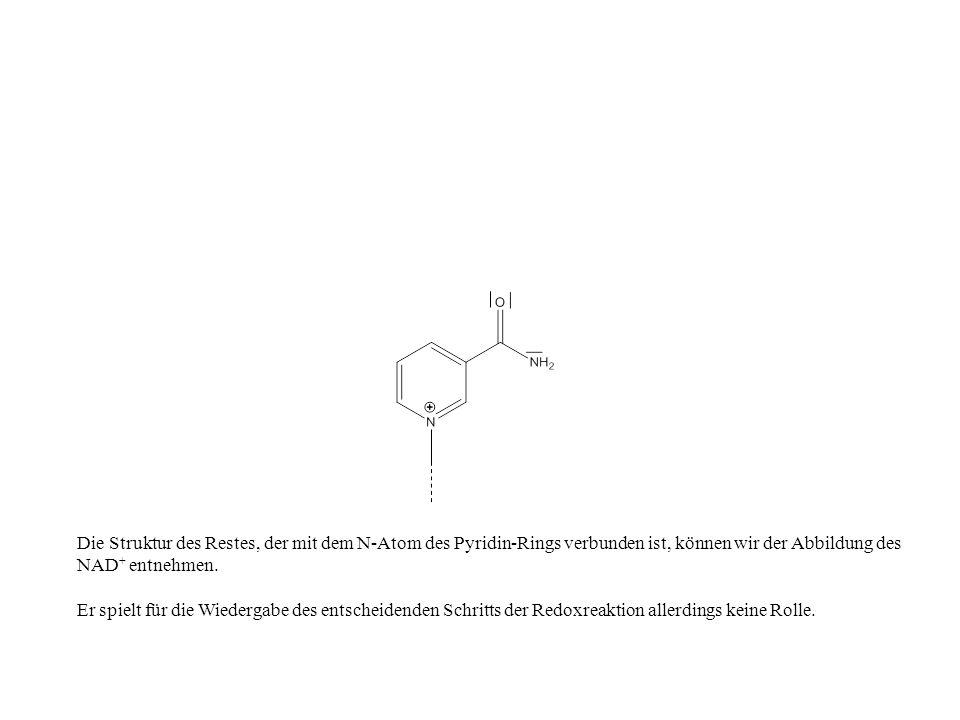 Die Struktur des Restes, der mit dem N-Atom des Pyridin-Rings verbunden ist, können wir der Abbildung des NAD + entnehmen. Er spielt für die Wiedergab