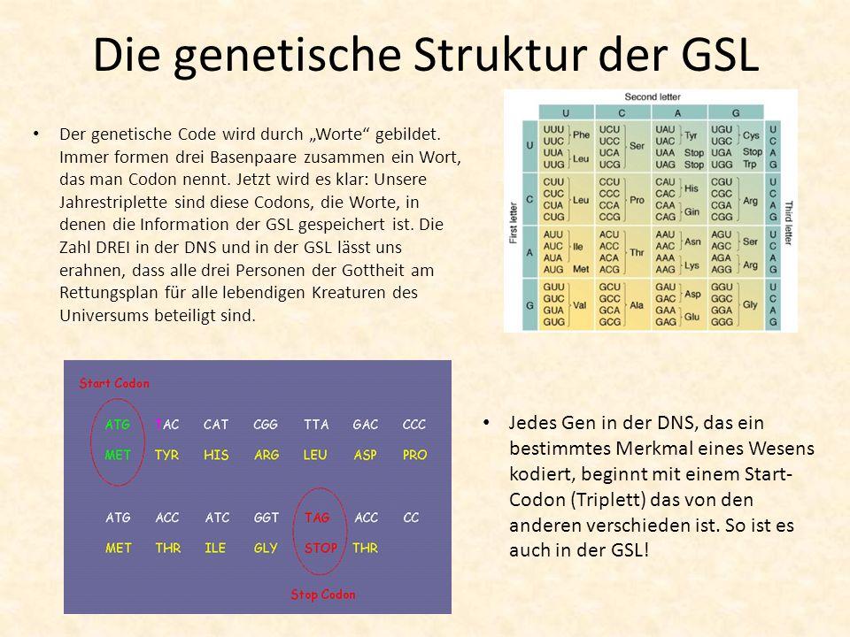 Die genetische Struktur der GSL Der genetische Code wird durch Worte gebildet. Immer formen drei Basenpaare zusammen ein Wort, das man Codon nennt. Je
