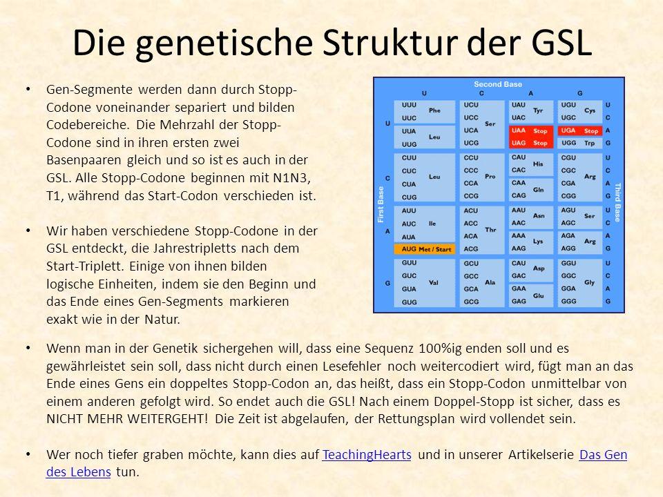 Die genetische Struktur der GSL Gen-Segmente werden dann durch Stopp- Codone voneinander separiert und bilden Codebereiche. Die Mehrzahl der Stopp- Co
