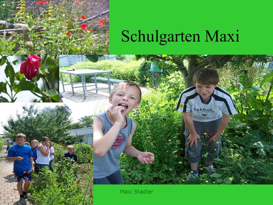 Maxi Schule Wir haben ein Insektenhotel gebaut, einen Zwerg geschnitzt, einen Topfe Getöpfert und zwanzig Eise assen wir. 2. Himmberen, Erdberen 4.Wür