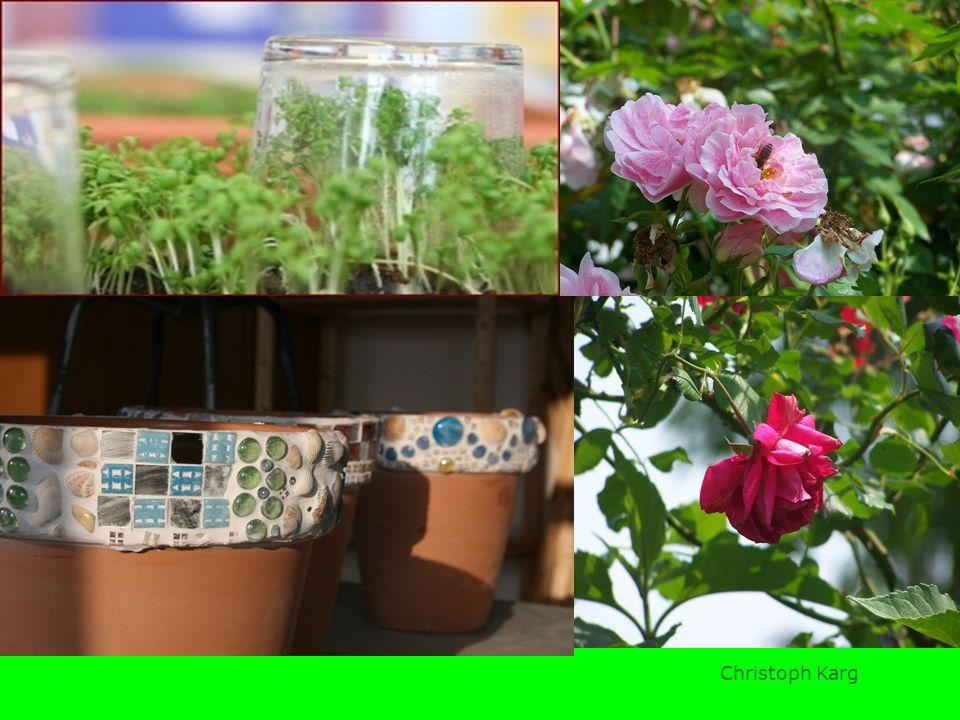 Es gibt die schönsten Blumen,pflanzen. Im Schulgarten wachsen Sonnenblumen,Rosen, 2.Es wachsen Waldeerdbeeren,Schnitlauch,Äpfel. 3.Es wurden Tomaten,S
