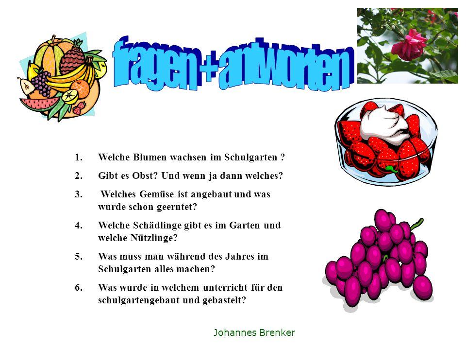 Fragen und antworten 1.welche blumen wachsen im schul garten?Ringelblume,rosen 2.gibt es Obst?Stachelbeere,Johannesbeere Fiona Backe