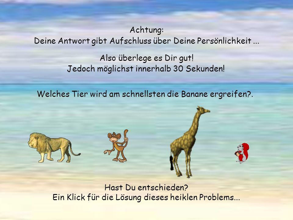 Vier verschiedene Tiere befinden sich unter einer grossen, einer wirklich grossen Palme. ein Löwe ein Schimpanse eine Giraffe ein Eichhörnchen Sie bes