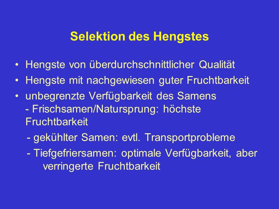 Selektion des Hengstes Hengste von überdurchschnittlicher Qualität Hengste mit nachgewiesen guter Fruchtbarkeit unbegrenzte Verfügbarkeit des Samens -