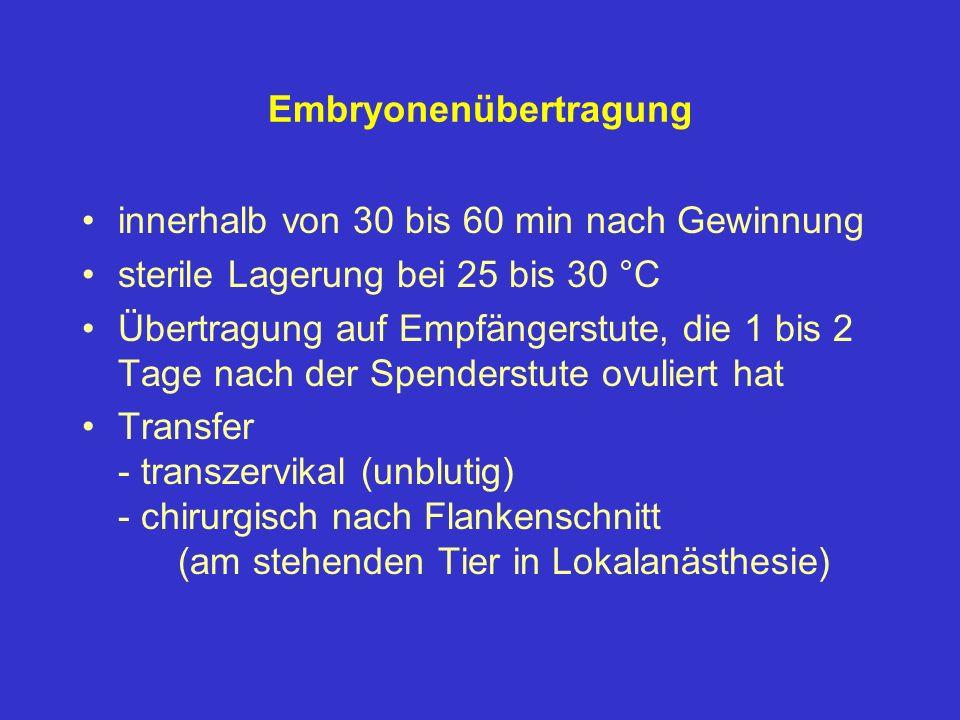 Embryonenübertragung innerhalb von 30 bis 60 min nach Gewinnung sterile Lagerung bei 25 bis 30 °C Übertragung auf Empfängerstute, die 1 bis 2 Tage nac