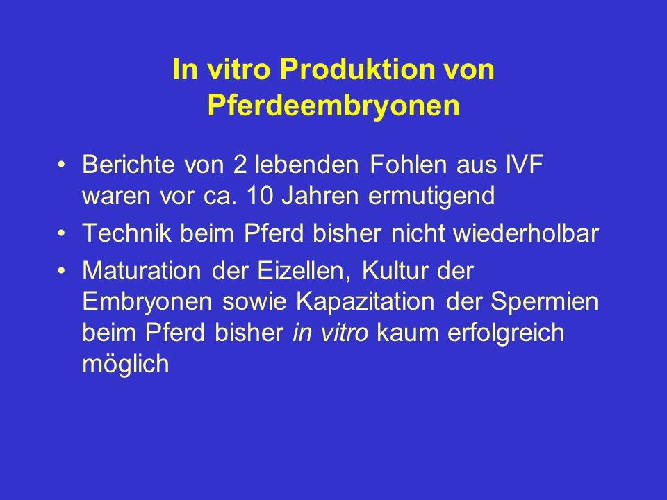 In vitro Produktion von Pferdeembryonen Berichte von 2 lebenden Fohlen aus IVF waren vor ca. 10 Jahren ermutigend Technik beim Pferd bisher nicht wied