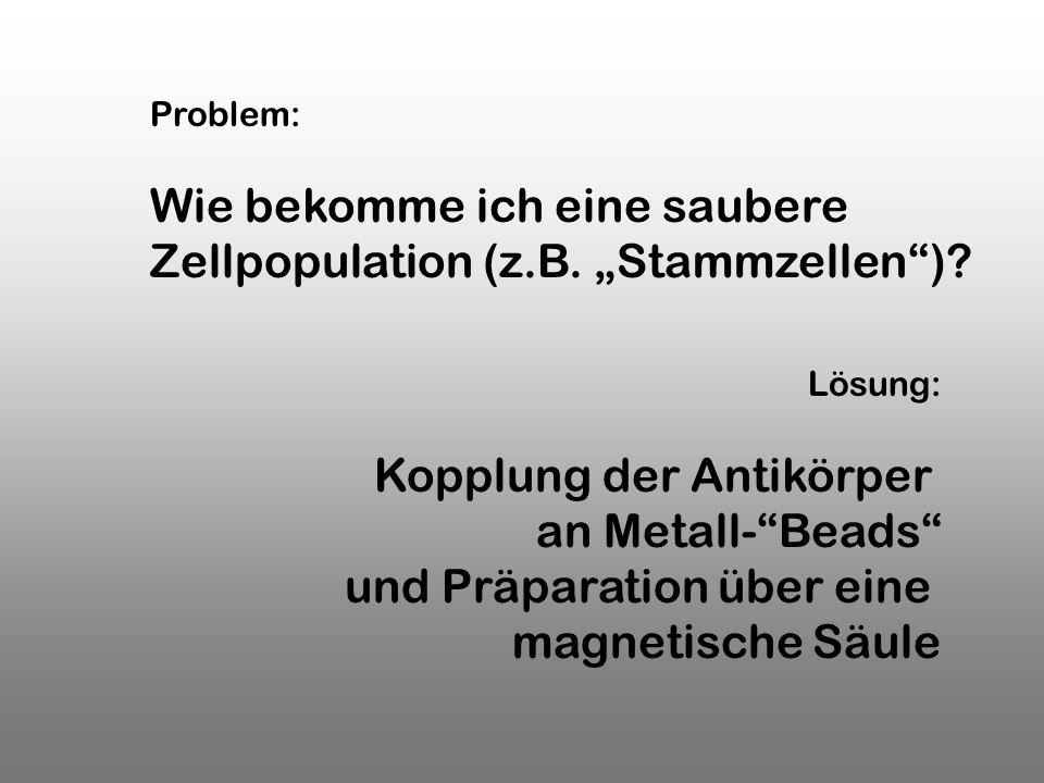 Lösung: Kopplung der Antikörper an Metall-Beads und Präparation über eine magnetische Säule Problem: Wie bekomme ich eine saubere Zellpopulation (z.B.