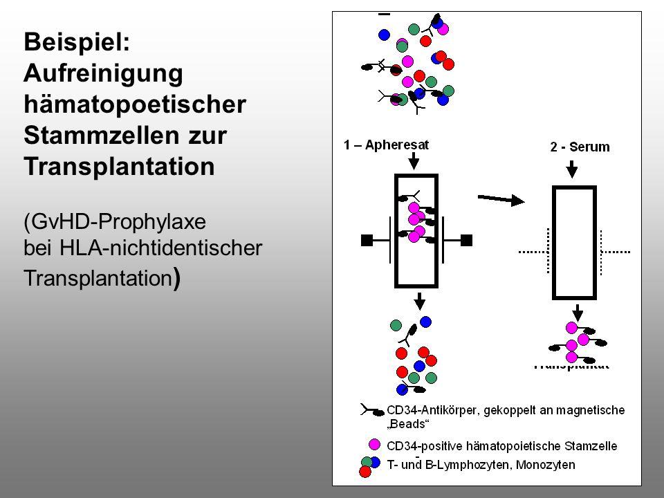 Beispiel: Aufreinigung hämatopoetischer Stammzellen zur Transplantation (GvHD-Prophylaxe bei HLA-nichtidentischer Transplantation )