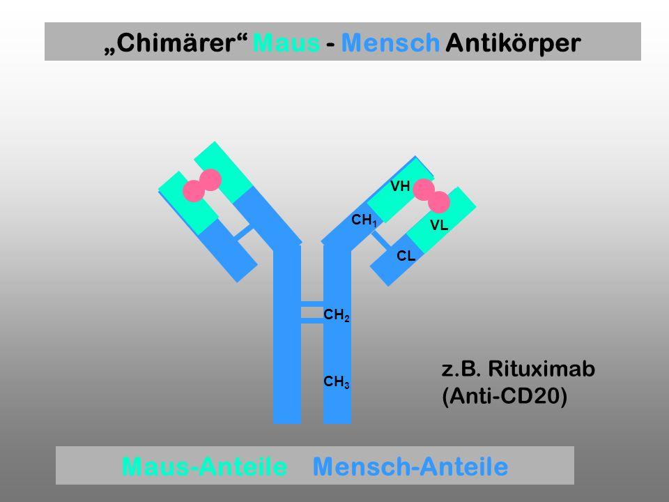 CH 1 VH VL CL CH 2 CH 3 z.B. Rituximab (Anti-CD20) Chimärer Maus - Mensch Antikörper Maus-Anteile Mensch-Anteile