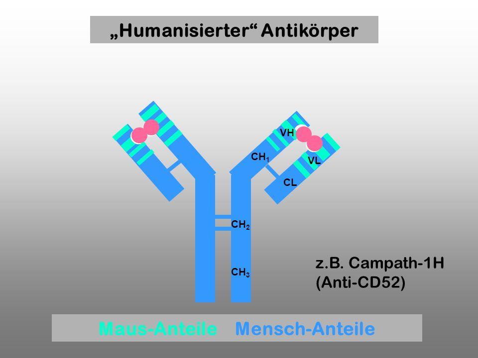 CH 1 CL CH 2 CH 3 VH VL z.B. Campath-1H (Anti-CD52) Humanisierter Antikörper Maus-Anteile Mensch-Anteile