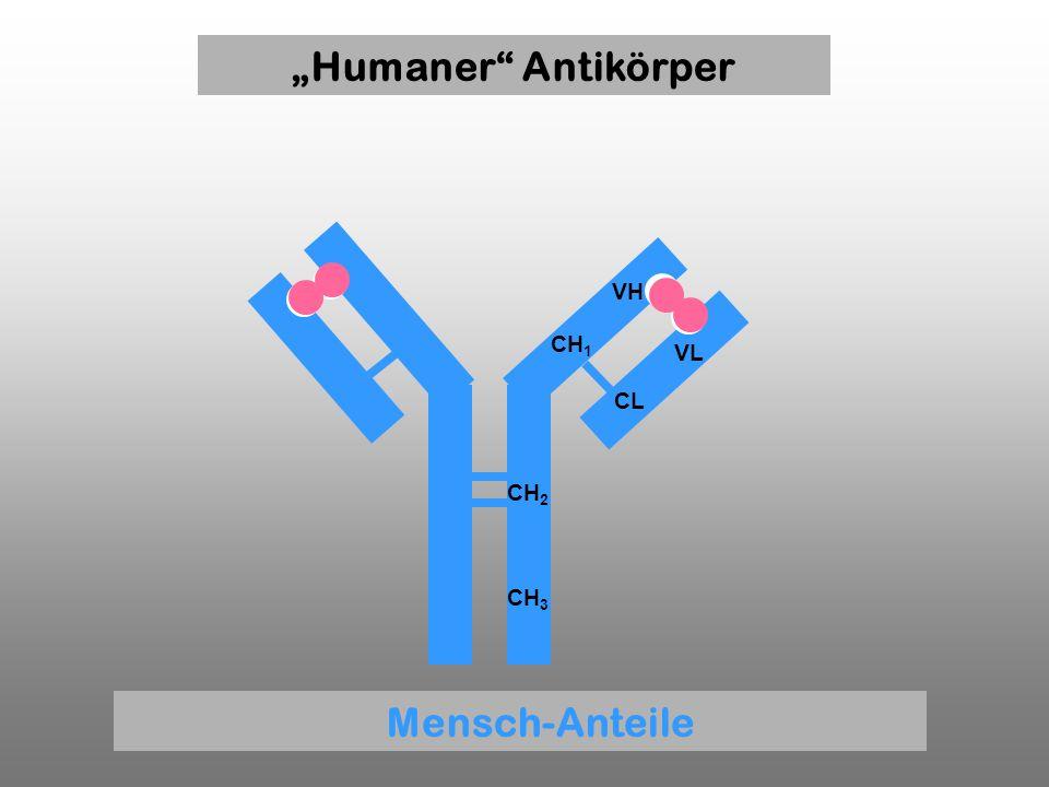 CH 1 VH VL CL CH 2 CH 3 Humaner Antikörper Mensch-Anteile