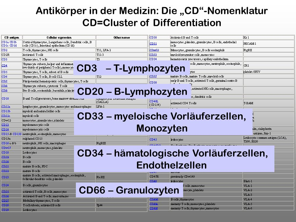 CD3 – T-Lymphozyten CD20 – B-Lymphozyten CD34 – hämatologische Vorläuferzellen, Endothelzellen CD33 – myeloische Vorläuferzellen, Monozyten CD66 – Gra