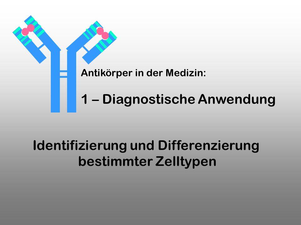 Identifizierung und Differenzierung bestimmter Zelltypen Antikörper in der Medizin: 1 – Diagnostische Anwendung