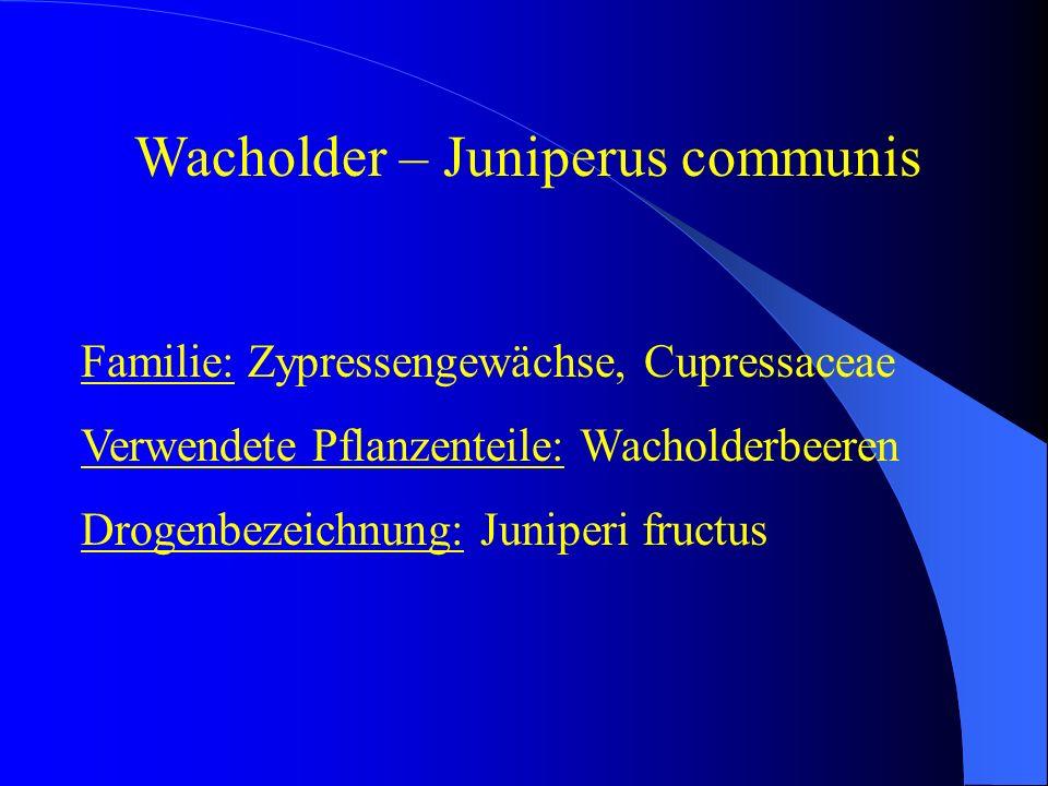 Familie: Zypressengewächse, Cupressaceae Verwendete Pflanzenteile: Wacholderbeeren Drogenbezeichnung: Juniperi fructus