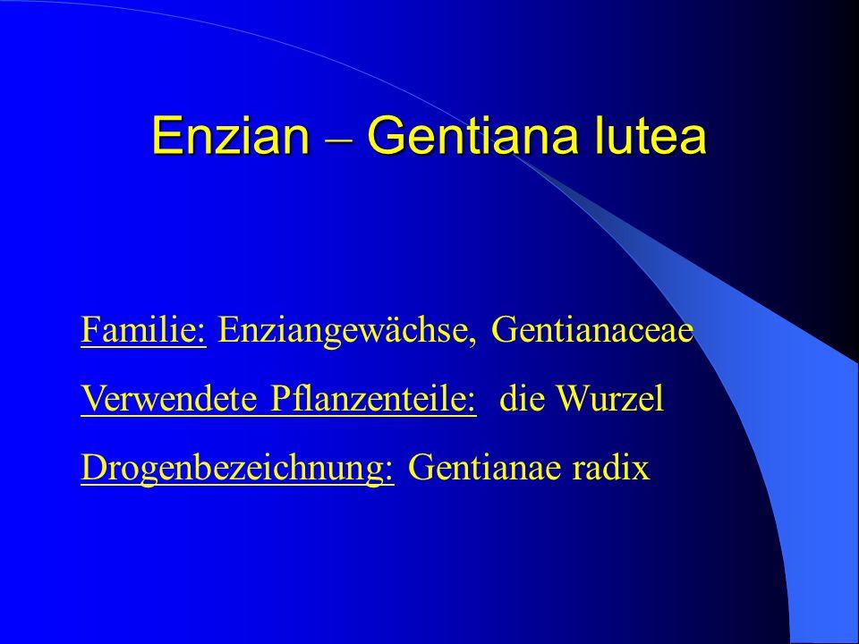 Enzian – Gentiana lutea Enzian – Gentiana lutea Familie: Enziangewächse, Gentianaceae Verwendete Pflanzenteile: die Wurzel Drogenbezeichnung: Gentiana