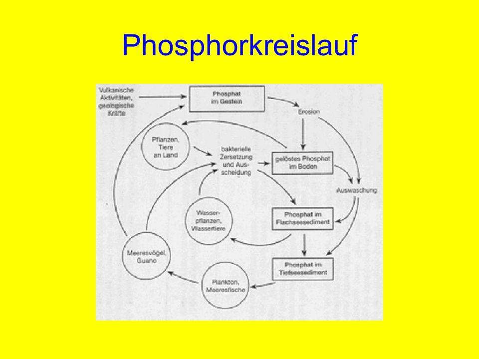 Phosphorkreislauf