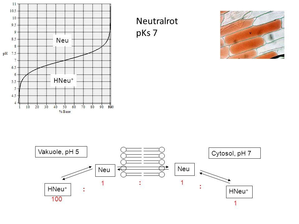 Neutralrot pKs 7 Neu HNeu + Neu 1 1: 100 : : 1 Vakuole, pH 5 Cytosol, pH 7 HNeu + Neu