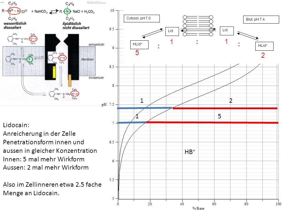 B HB + 12 15 Lidocain: Anreicherung in der Zelle Penetrationsform innen und aussen in gleicher Konzentration Innen: 5 mal mehr Wirkform Aussen: 2 mal