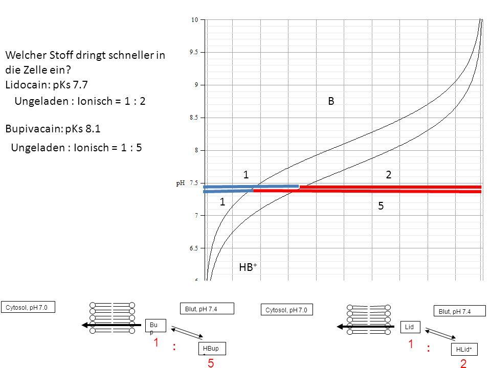 B 12 1 5 Welcher Stoff dringt schneller in die Zelle ein? Lidocain: pKs 7.7 Bupivacain: pKs 8.1 Ungeladen : Ionisch = 1 : 5 Ungeladen : Ionisch = 1 :