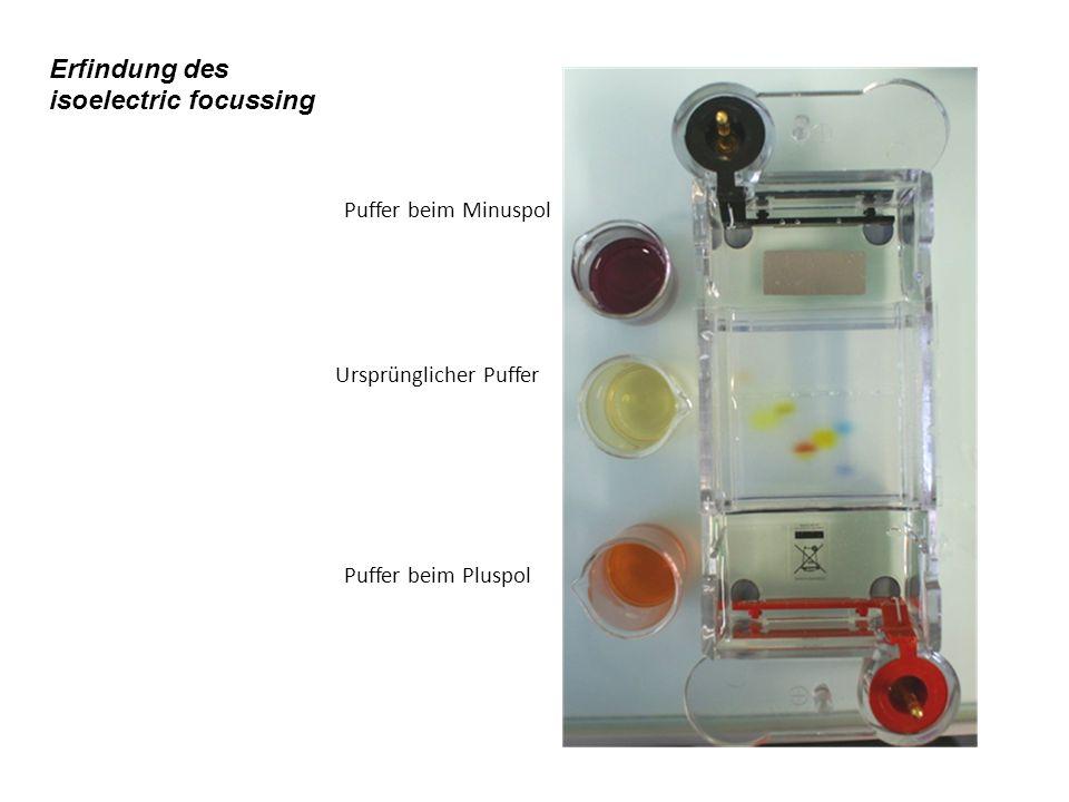 Puffer beim Minuspol Puffer beim Pluspol Ursprünglicher Puffer Erfindung des isoelectric focussing