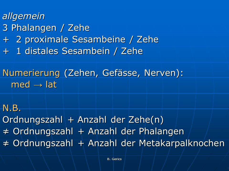 B. Gerics allgemein 3 Phalangen / Zehe + 2 proximale Sesambeine / Zehe + 1 distales Sesambein / Zehe Numerierung (Zehen, Gefässe, Nerven): med lat N.B