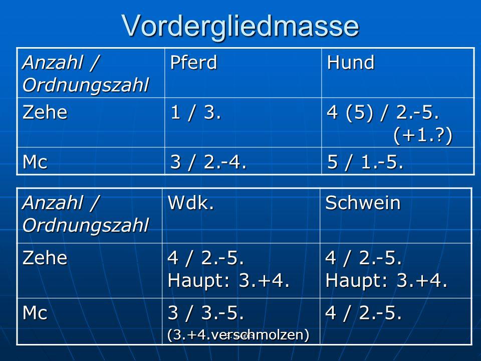 B. Gerics Vordergliedmasse Anzahl / Ordnungszahl PferdHund Zehe 1 / 3. 4 (5) / 2.-5. (+1.?) Mc 3 / 2.-4. 5 / 1.-5. Anzahl / Ordnungszahl Wdk.SchweinZe