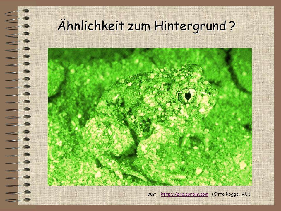 Ähnlichkeit zum Hintergrund ? aus: http://pro.corbis.com (Otto Rogge, AU)http://pro.corbis.com