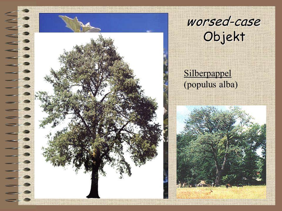 worsed-caseObjekt Silberpappel (populus alba) Blattoberseite: grün-glänzend Blattunterseite: weiss-matt