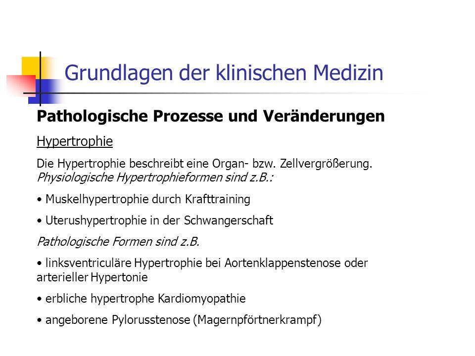 Grundlagen der klinischen Medizin Pathologische Prozesse und Veränderungen Hypertrophie Die Hypertrophie beschreibt eine Organ- bzw.