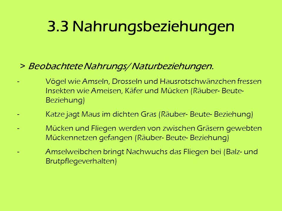 3.3 Nahrungsbeziehungen > Beobachtete Nahrungs/ Naturbeziehungen. - Vögel wie Amseln, Drosseln und Hausrotschwänzchen fressen Insekten wie Ameisen, Kä