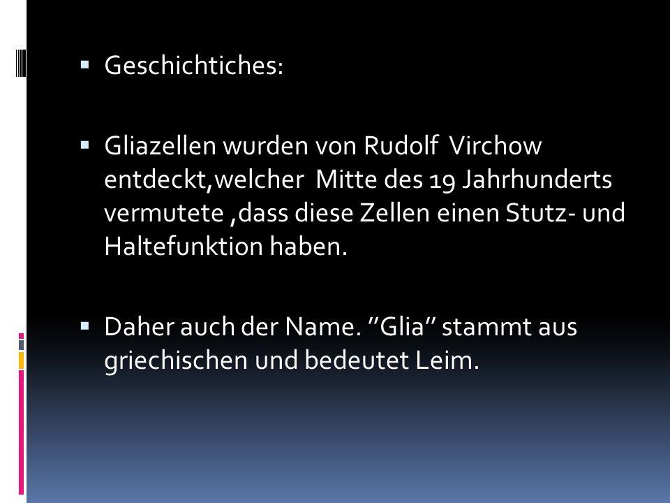 Geschichtiches: Gliazellen wurden von Rudolf Virchow entdeckt,welcher Mitte des 19 Jahrhunderts vermutete,dass diese Zellen einen Stutz- und Haltefunk