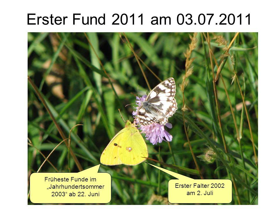 Erster Fund 2011 am 03.07.2011 Früheste Funde im Jahrhundertsommer 2003 ab 22. Juni Erster Falter 2002 am 2. Juli