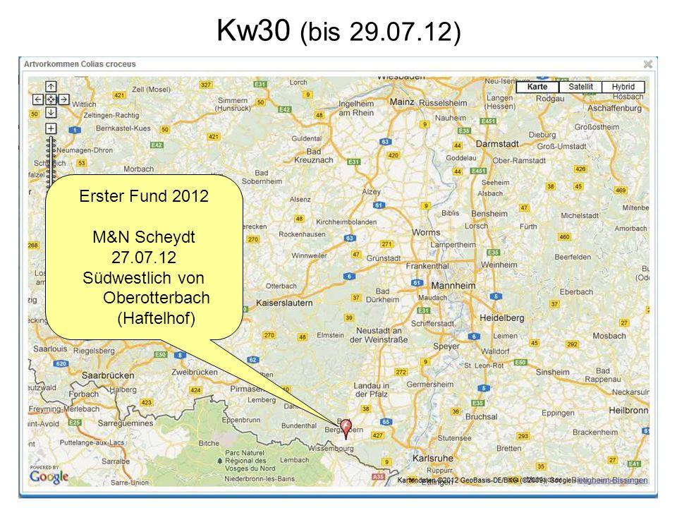 Kw30 (bis 29.07.12) Erster Fund 2012 M&N Scheydt 27.07.12 Südwestlich von Oberotterbach (Haftelhof)