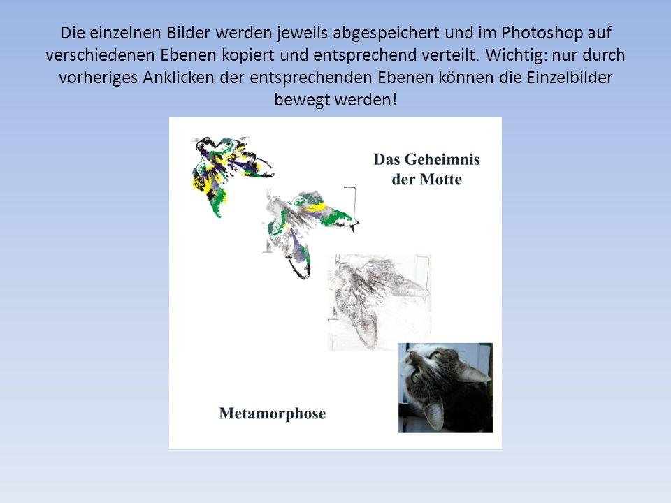 Die einzelnen Bilder werden jeweils abgespeichert und im Photoshop auf verschiedenen Ebenen kopiert und entsprechend verteilt. Wichtig: nur durch vorh