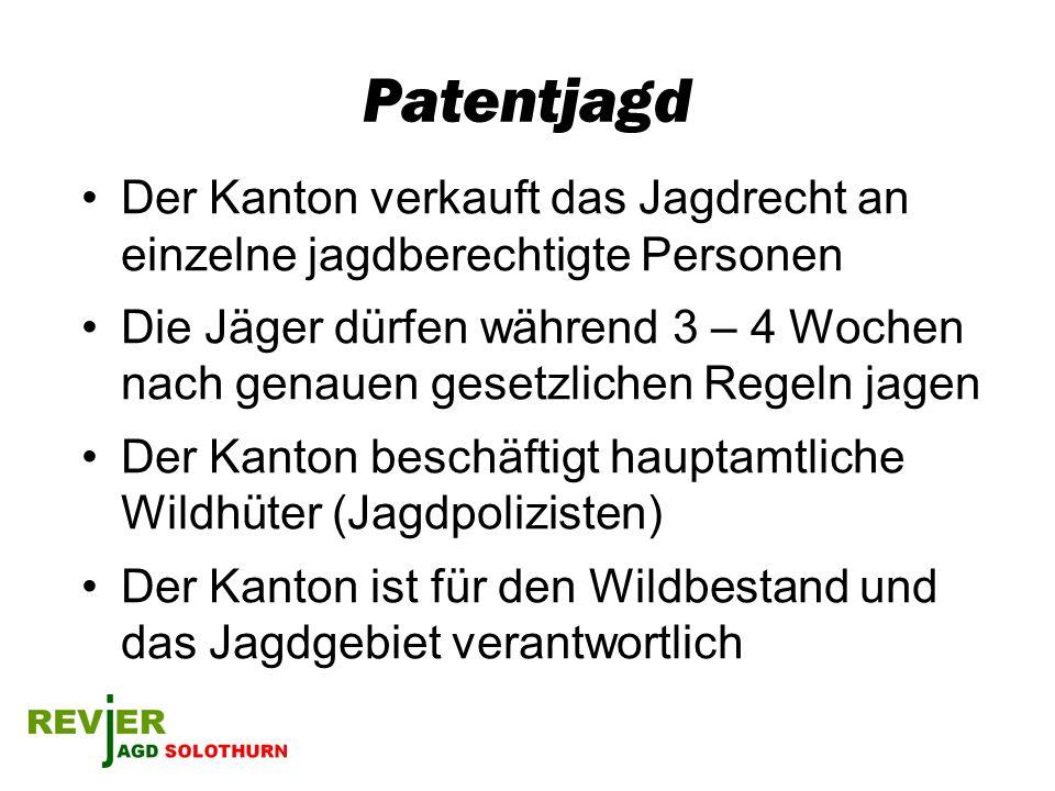 Patentjagd Der Kanton verkauft das Jagdrecht an einzelne jagdberechtigte Personen Die Jäger dürfen während 3 – 4 Wochen nach genauen gesetzlichen Rege
