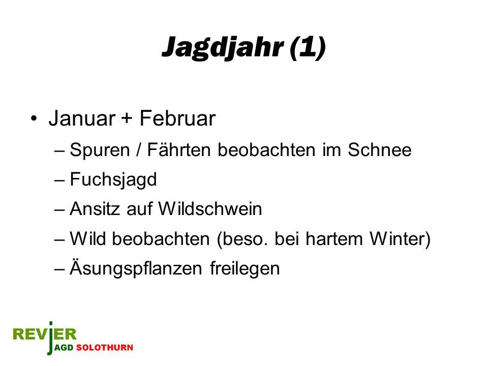 Jagdjahr (1) Januar + Februar –Spuren / Fährten beobachten im Schnee –Fuchsjagd –Ansitz auf Wildschwein –Wild beobachten (beso. bei hartem Winter) –Äs
