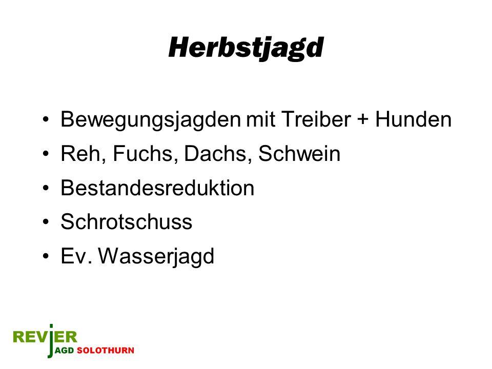 Herbstjagd Bewegungsjagden mit Treiber + Hunden Reh, Fuchs, Dachs, Schwein Bestandesreduktion Schrotschuss Ev. Wasserjagd