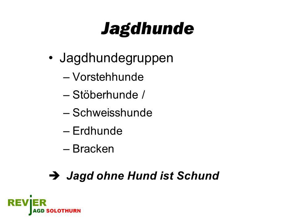 Jagdhunde Jagdhundegruppen –Vorstehhunde –Stöberhunde / –Schweisshunde –Erdhunde –Bracken Jagd ohne Hund ist Schund